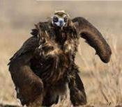 Mutant birds