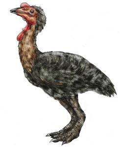 Patagopteryx deferrariisi