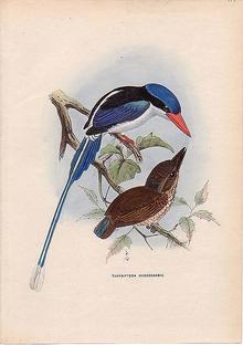Little Paradise-Kingfisher