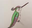Arrow-headed Hummingbird