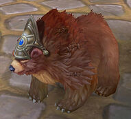 Pet bear 01