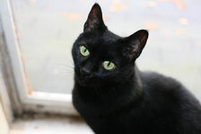 Cat-pictures-black-cat-473