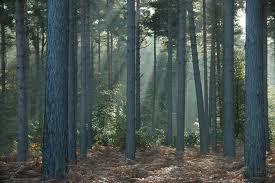 File:Cenoriar forest.jpg