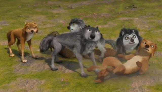 File:Wolf fight....jpg