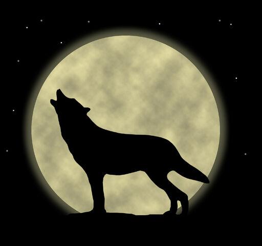 File:WOLFS-wolfs-29590056-800-750.jpg