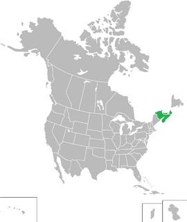 Niagara (King of America)
