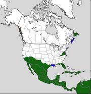 North American Colonization TE circa 1620