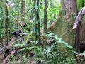 Wet Forests of Queensland