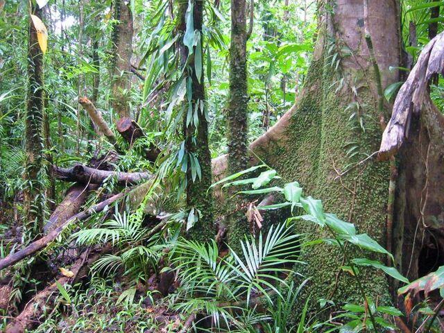 File:Wet Forests of Queensland.jpg