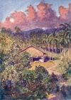 Sulu house & coconut plantation