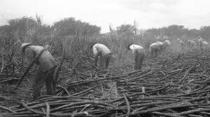 PlantationWorkers