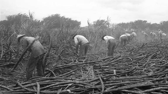 File:PlantationWorkers.jpg