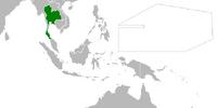 Siam (Cherry, Plum, and Chrysanthemum)
