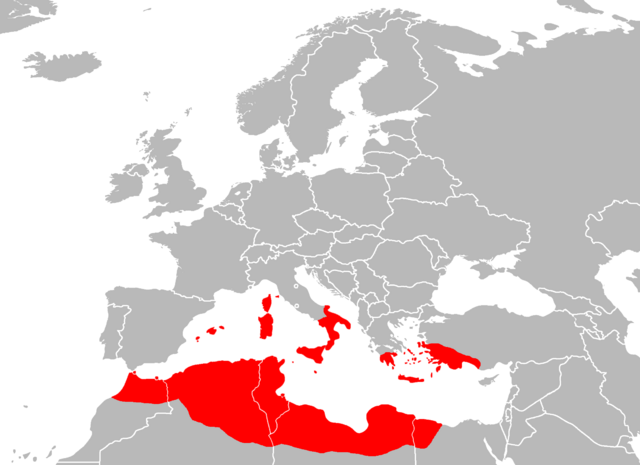 File:Empire of holy carthage.png