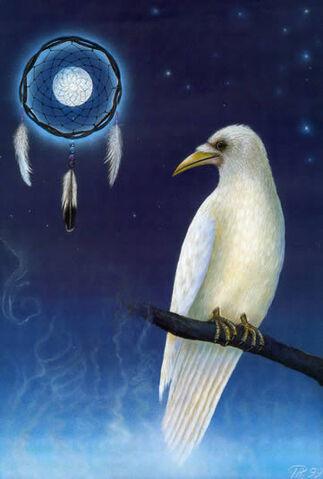 File:White raven dreamcatcher.jpg