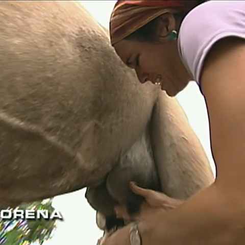 Lorena attempts to milk a camel at the Roadblock on <a href=