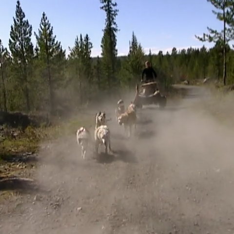Katie performs the dog-sled Roadblock on <a href=