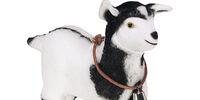 Sombrita the Baby Goat