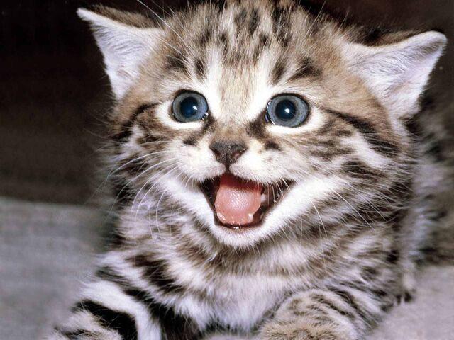 File:Glorious kitty.jpg
