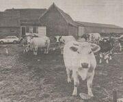 Bogaarden farm