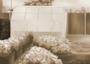 Clube de Jardinagem nas memórias da Debrah