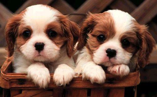File:Pups.jpg