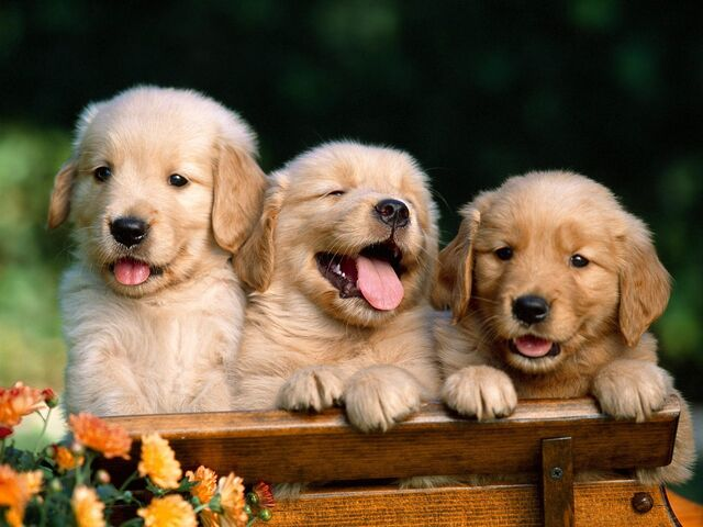 File:Friends-Forever-puppies-9460947-1600-1200.jpg