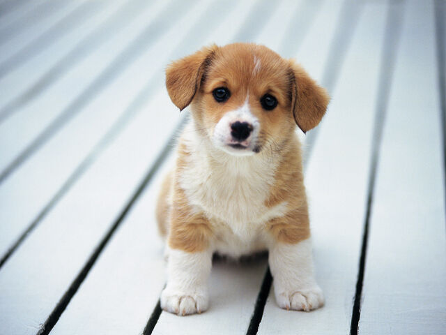 File:Cute-puppy-SAVED-YAY-adorable-animals-are-in-need-just-help-33290382-1600-1200.jpg