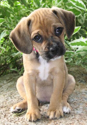 File:Puppy-pic21.jpg