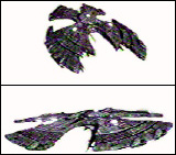 Garuda Class