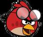 Daniel google bird