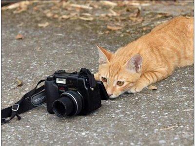 File:Photographer.jpg