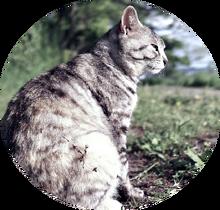 Cat-in-the-wild