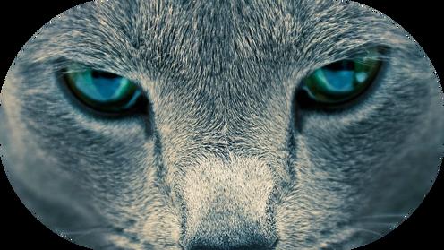 A NEWminimalist-cat-wallpaper wallpprs.com