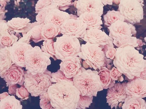 Flowers-pastel-pretty-roses-Favim.com-299707
