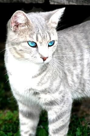 bruh look at my cat