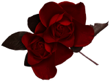 Dark Red Rose Clipart