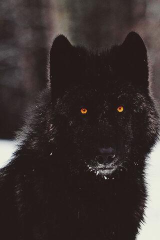 File:228672-The-Dark-Wolf.jpg