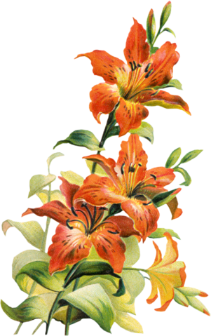 free clip art lily flowers - photo #32