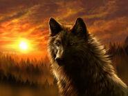 Dark-Wolf-wolves-33748339-640-480