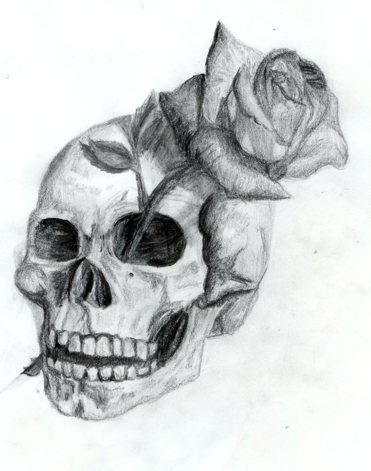 Skull And Rose By Dyslogisticg