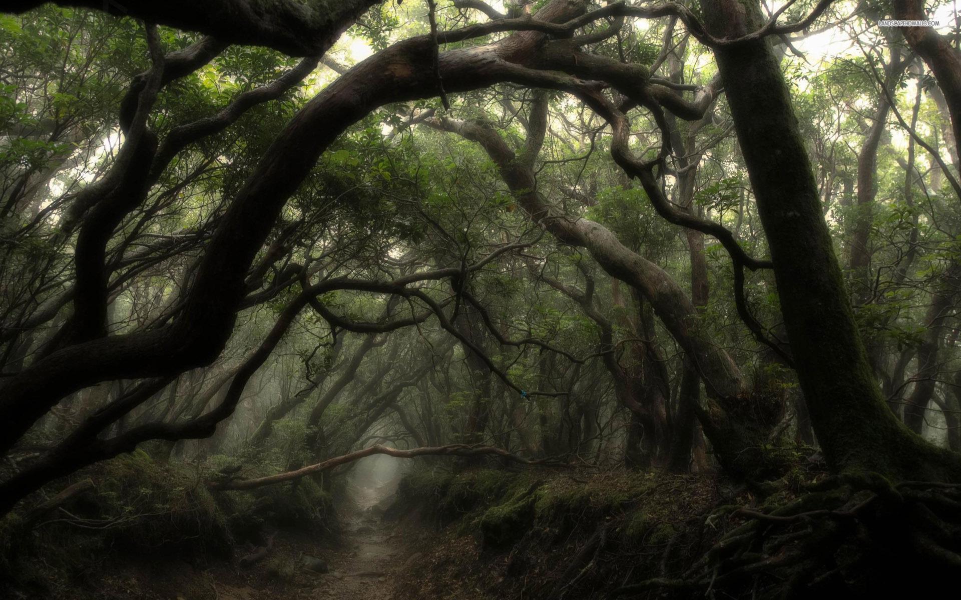 Image Dark Forest Widscreen Wallpaper Jpg Animal Jam