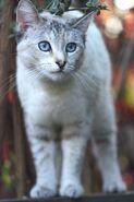 White Cat Vertical