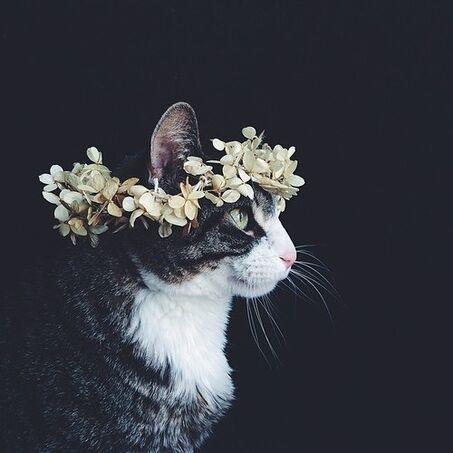 File:Kitty-0.jpg