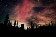 Galaxy forest