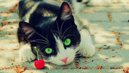 Black-And-White-Cat-With-Green-Eyes-Picture-HD-Wallpaper