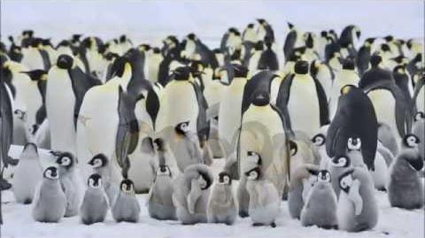 Amazing Facts About Emperor Penguins