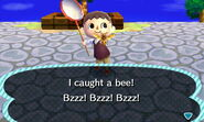 Bee Caught