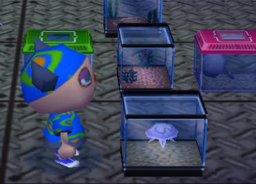 File:Jellyfish tank.PNG