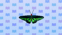 RajaBrookeButterfly